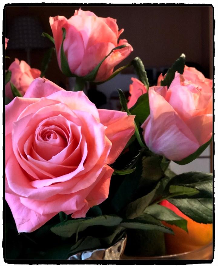 ROSOR i blom.jpg