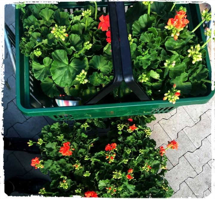 kundkorg blommor.jpg