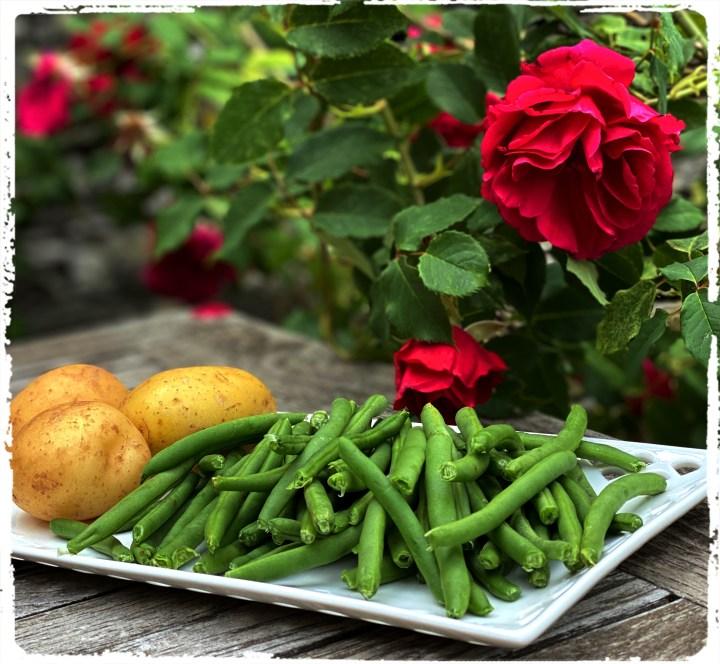 potatis och bönor
