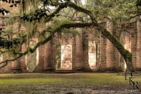 Old-Sheldon-Church-Live-oak-Tree-HDR-MG-6154