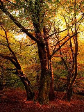 Autumn Sunset, Callander, Scotland Photo by Gingiber