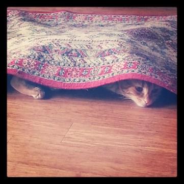Cat under rug greenhouse