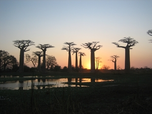 30-allee-baobabs-soleil-couchant