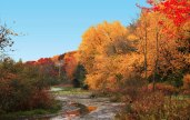 Trees with brilliant fall colors - yellows, reds, rusts, oranges, and greens. A small meandering stream is in the foreground.