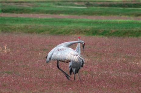 cranes_55_v2
