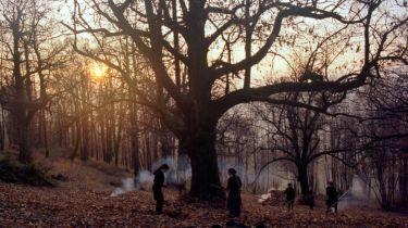 Zgodbe iz kostanjevih gozdov (foto: Nosorogi)