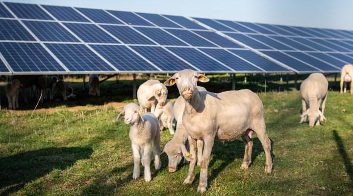 Solar Energy Helps Farms Withstand Economic Downturns - Cedar Creek Energy