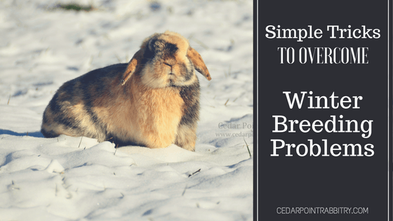 Simple Tricks To Overcome Winter Breeding Problems
