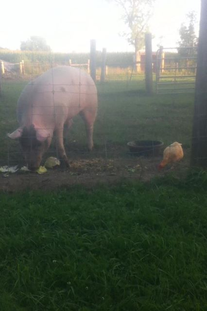 Oink and Cricket Eating
