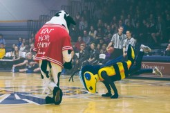 The Chick-fil-A cow and Yellow Jacket compete in a dance-off during Moonlight Madness on Saturday, Nov. 1. (Photo: Jillian Philyaw)