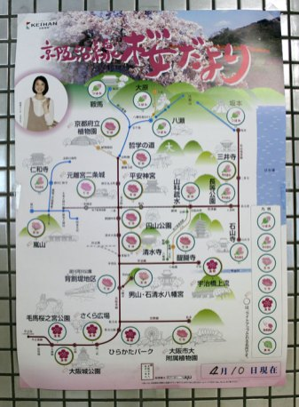 Daily cherry blossom forecast for the city of Kyoto (full blossom, half, not blossoming yet...)