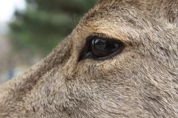 Yes, you can get real close to the deer.