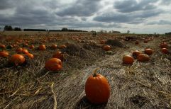 hurricane-sandy-empty-places-pumpkin-patch_60691_600x450