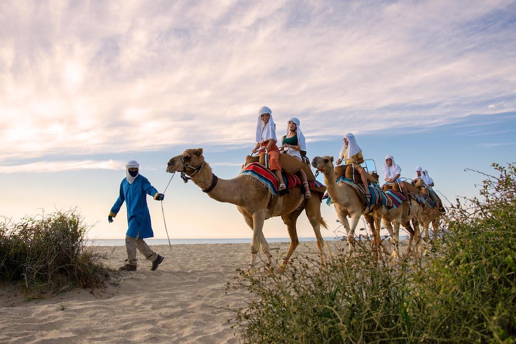lblc_Experiences_Camels_Group