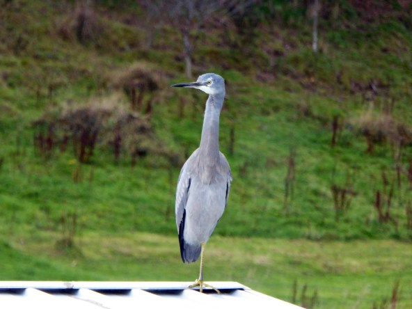 Egret (3)