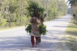 Woman carrying wood and fodders
