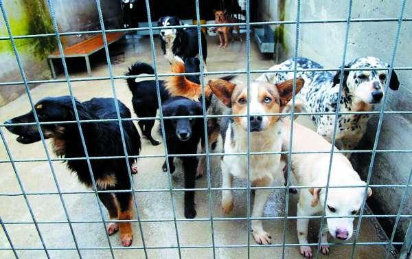 Canile di Palermo: no alla deportazione dei cani, si alla trasparenza