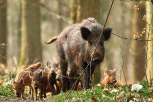 problema suidi caccia