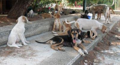 canile intercomunale cani randagi