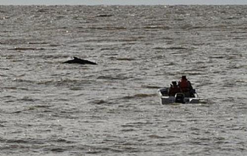 ballena-puerto-madero