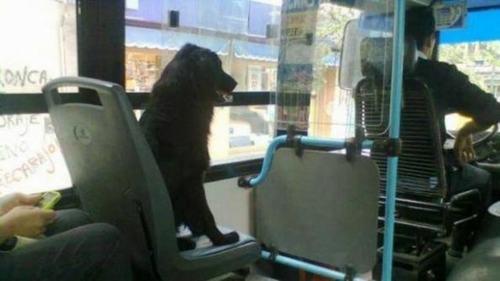 perro en colectivo