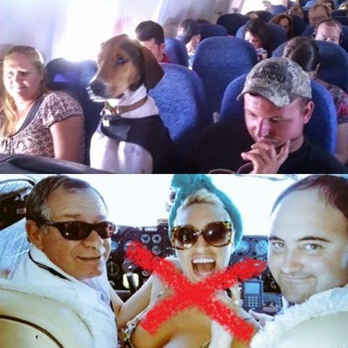 perros-gatos-en-aerolineas