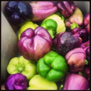 Unripe sweet peppers.
