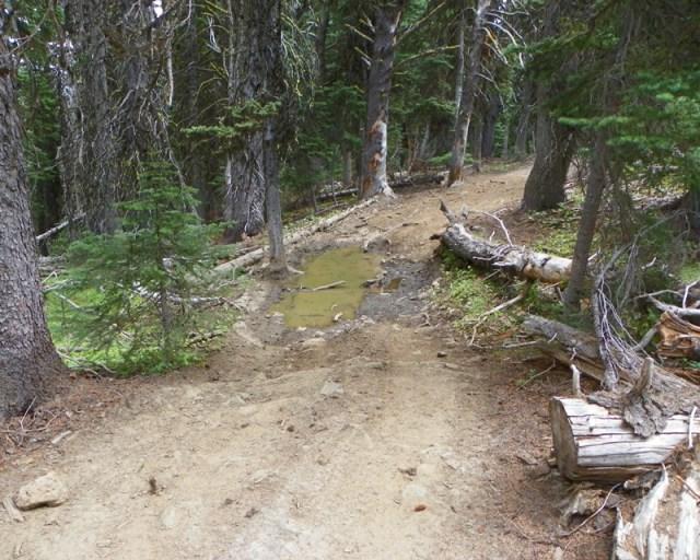 Photos: Trail 4W613 Work Day 38