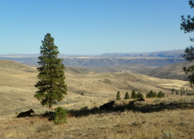 Photos: Pacific Northwest Backroad Adventures North Colockum Tour 42