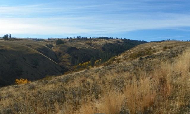 Cleman Mountain Halloween Backroads Run – Oct 29 2011 11