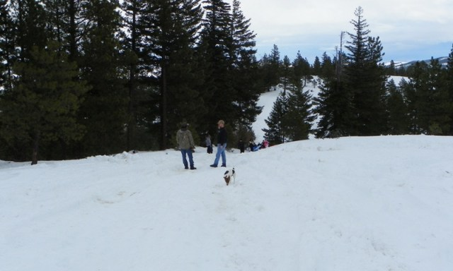 Sledding/Snow Wheeling Run at the Ahtanum State Forest 34