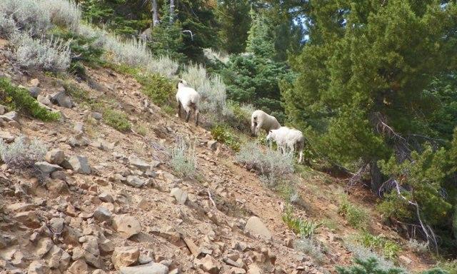 Little Bald Mountain Backroads Trip 27