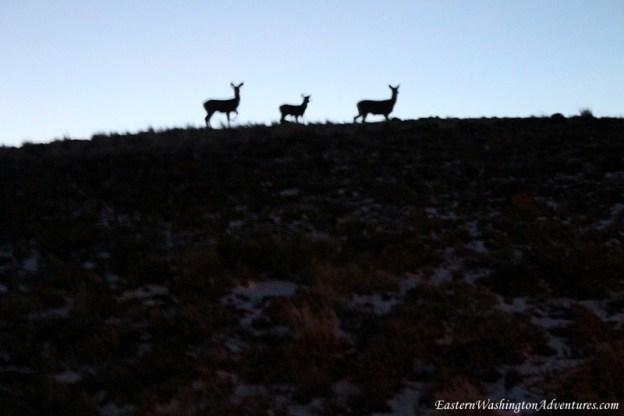 Wenas Wildlife Area
