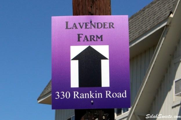 Selah Ridge Lavender Farm