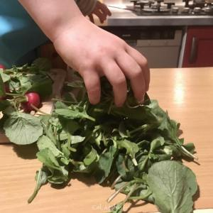 garder les fanes de radis