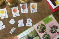 activité de dégustation de pommes