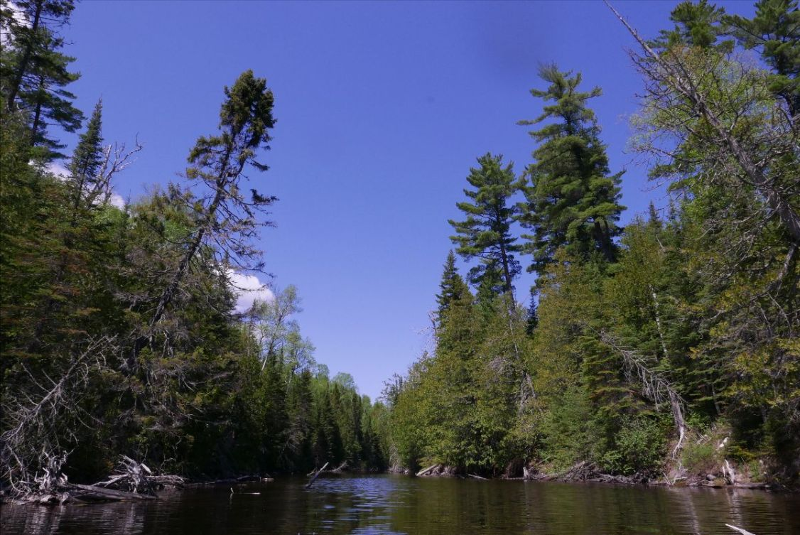 pines_and_black_spruce