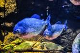 fish-ncworks-18-of-48