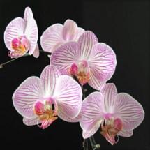 orchideen_04