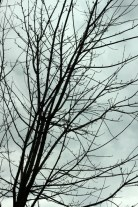 Winter Trees (2)