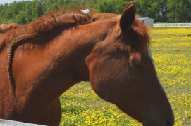 His mane was braided and there were some white little flowers up near his head. He came to see what I was doing.