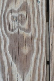 Notice {owl on my deck}