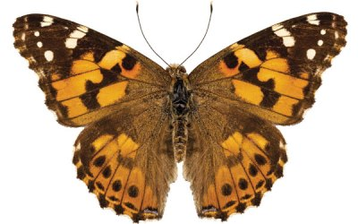 Get Ready for Spring with Butterfly Science!