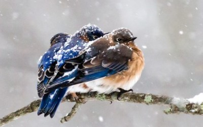 How to Help Birds in Winter!