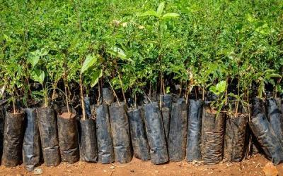 Over 110 Million Trees Planted by 2.5 Million Volunteers in India
