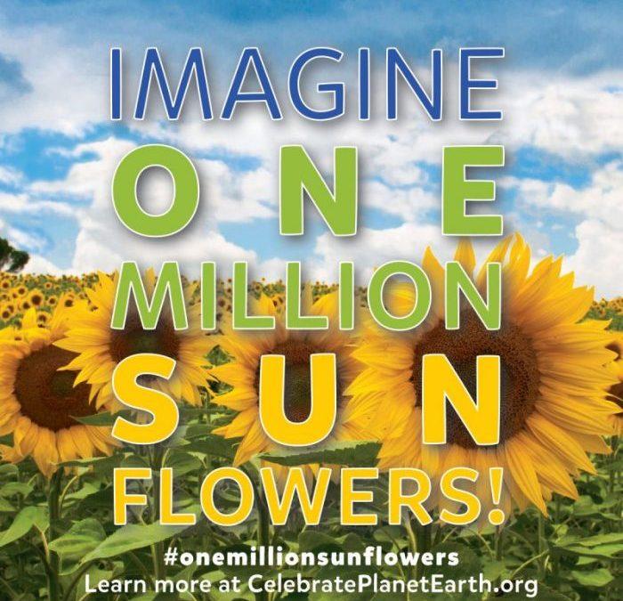 One Million Sunflowers