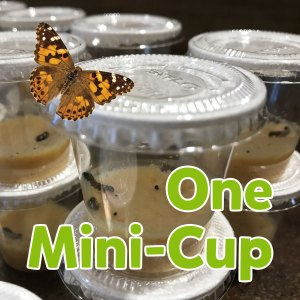 One Caterpillar Mini-Cup