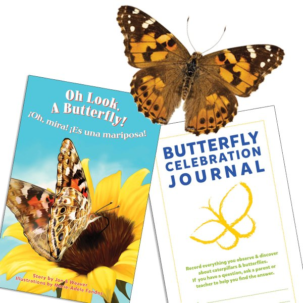 Family Butterfly Kit