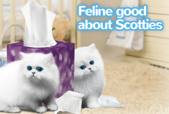 Scotties kittens feline good