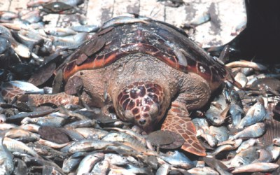 Take 30 Seconds to Save Sea Turtles